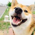 犬の『口臭』が臭す…