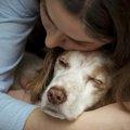 犬の老衰の末期症状と飼い主がしてあげられること