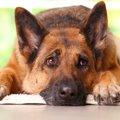犬の恐怖症とヒトの…