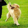 愛犬の安全の為に!…