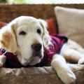 冬には犬も洋服を着…