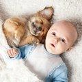 犬が人の赤ちゃんに…