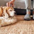 犬の飼い主は注意!…