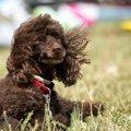 風が強い日、犬の散…