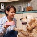 犬が何でも食べてしまう病気「異食症」に要注意!