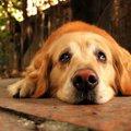 犬が『悲しい気持ち…