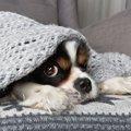 犬の下痢は冬になる…