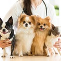犬や猫と関わる仕事…