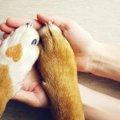 愛犬と飼い主、お互…