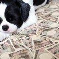 愛犬のための貯金は…