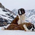 『短命な犬種』3選…