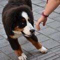 愛犬の『苦手』を克…