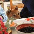 犬が黒豆を食べても…