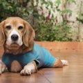犬の術後服とは?そ…
