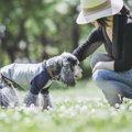 犬の視力は犬種によって違うらしい