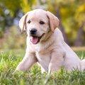 犬がアレルギーを引き起こしやすい食材リストとアレルギー対策