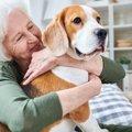 高齢者が犬の散歩を…