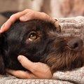 犬の「自律神経失調…