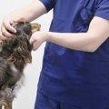 犬の尿路結石は毎日の食事ケアで予防しよう!
