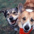 『寿命が長い犬種』…