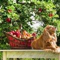 犬にドライフルーツは食べさせても大丈夫?