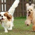 犬同士で遊ばせると…