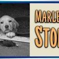 違法な子犬工場の摘…