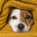 犬のために飼い主が…