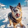 犬が雪を食べる!こ…