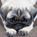 犬の『嫉妬サイン』…