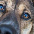 犬が目を見開いてい…