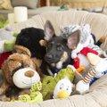 犬がおもちゃにすぐ…
