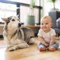 犬と赤ちゃんは一緒…