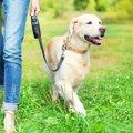 犬の散歩をしてはい…