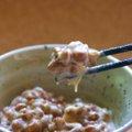 犬に納豆を食べさせても大丈夫?与え方のポイントと注意点を解説