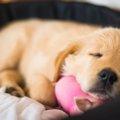 愛犬が飼い主の足の…