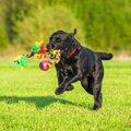 犬の訓練の後に遊び…