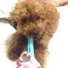 犬の誤飲について ~対処と予防法~