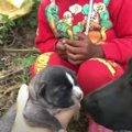 子犬を育てる『野良犬ママ』を全力サポート!人間を信頼する姿に感動