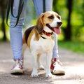 散歩のたびに犬の足…