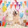 愛犬の誕生日を祝う…