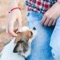 犬にとって『触られ…