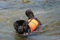 救助犬の災害現場で…の画像