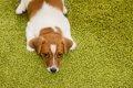 犬との生活に疲れて…の画像