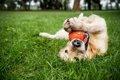 犬が飼い主に『遊ぼ…の画像