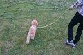 愛犬との散歩をもっ…の画像