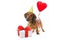愛犬のために揃えた…の画像