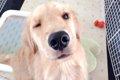 犬にオレンジ 食べ…の画像
