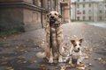 犬の多頭飼いと1頭飼…の画像