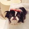 【超快適!】愛犬の…の画像